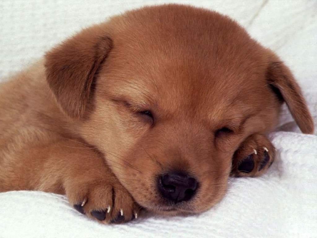perrito dormilon