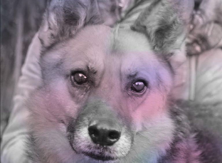 Perro en Adopción mirando de frente.