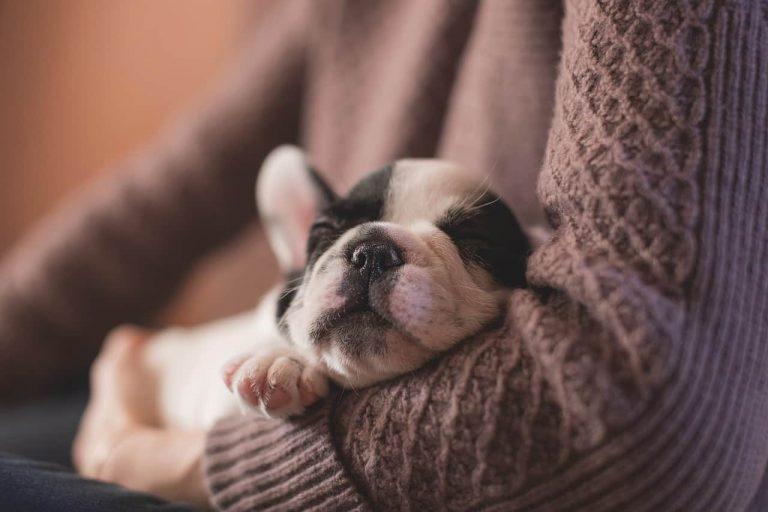 Adoptar Un Perro, 10 cosas que no sabes