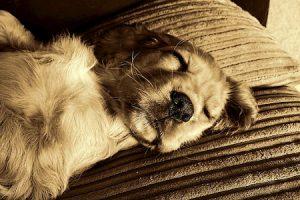Perro adoptado durmiendo