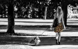 Un perro paseando con su dueña por un parque
