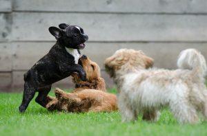 varios perros jugando
